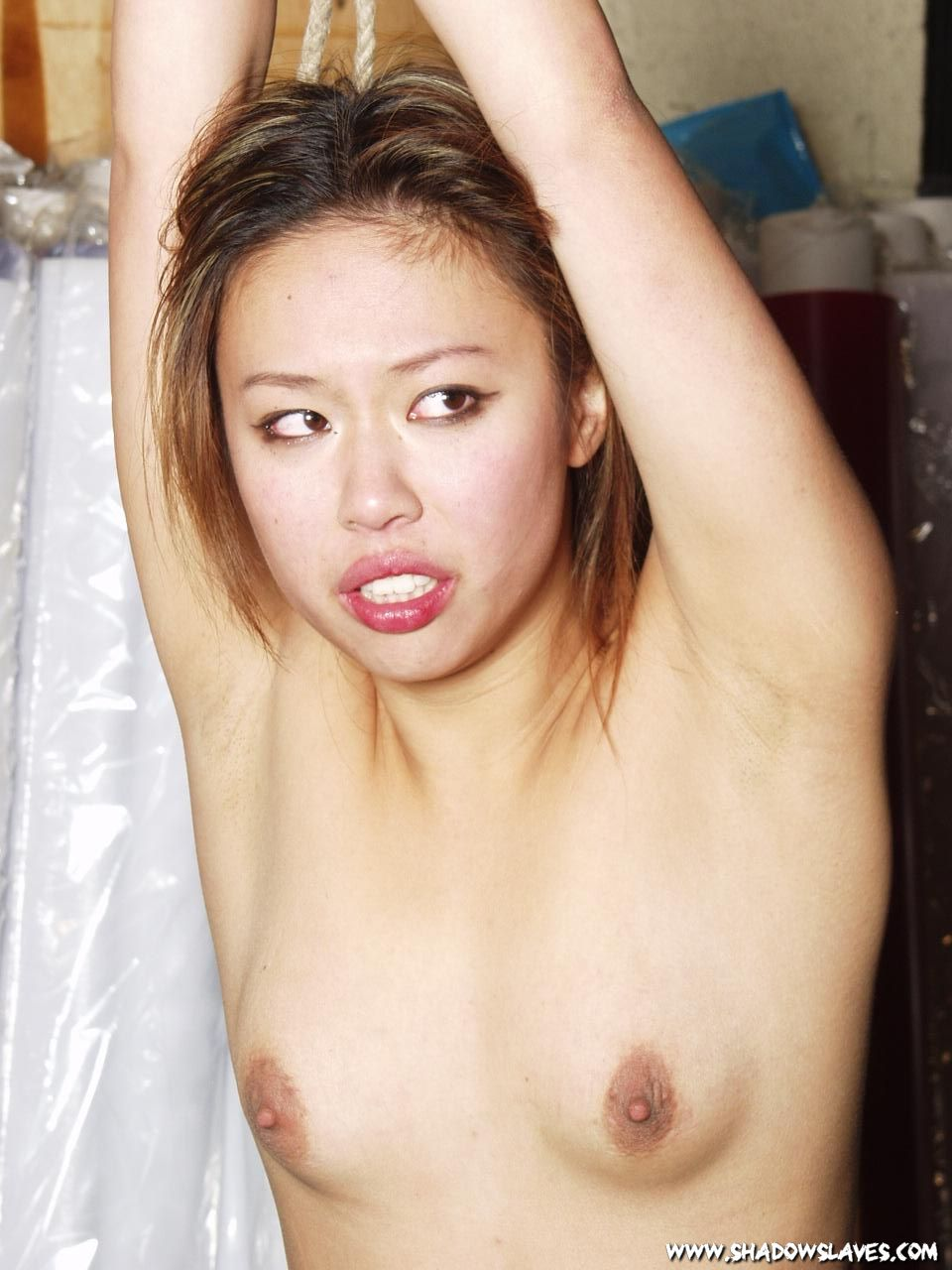 Amusing pussy asian tigers whipped assured, that you